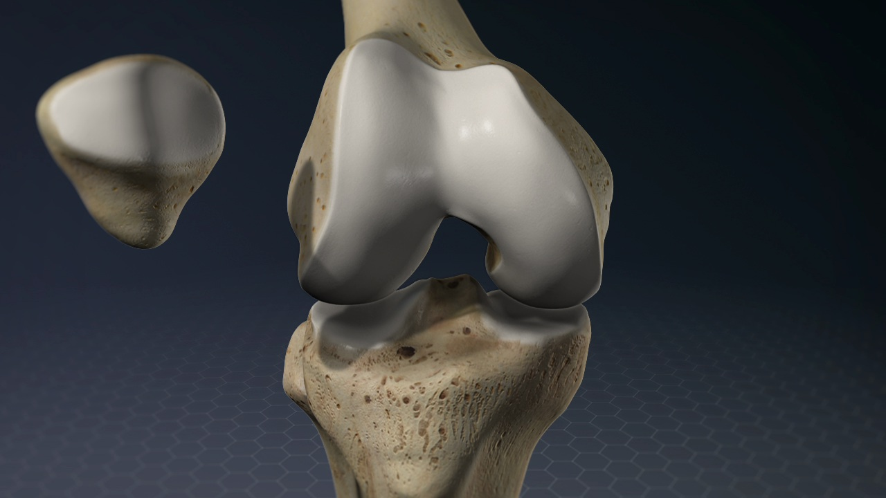 Anatomy Of The Knee Manhattan Orthopedic Care